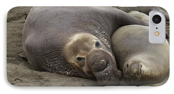 IPhone Case featuring the photograph Elephant Seal Couple by Duncan Selby