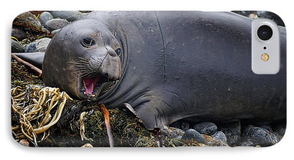 Elephant Seal Of Ano Nuevo State Reserve IPhone Case by Priscilla Burgers