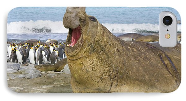 Elephant Seal Roaring IPhone Case by Yva Momatiuk John Eastcott