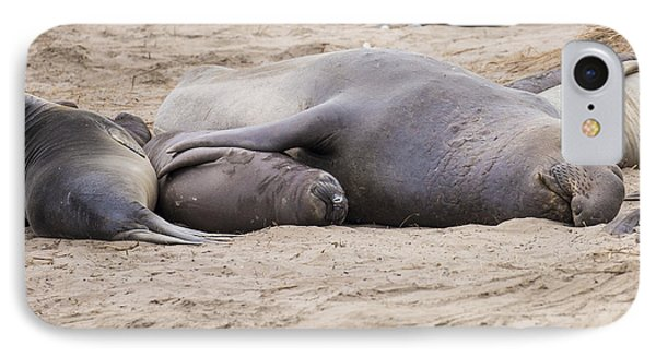 Elephant Seals IPhone Case by Curt Lerner