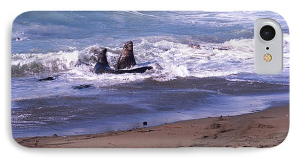 Elephant Seals In The Sea, San Luis IPhone Case