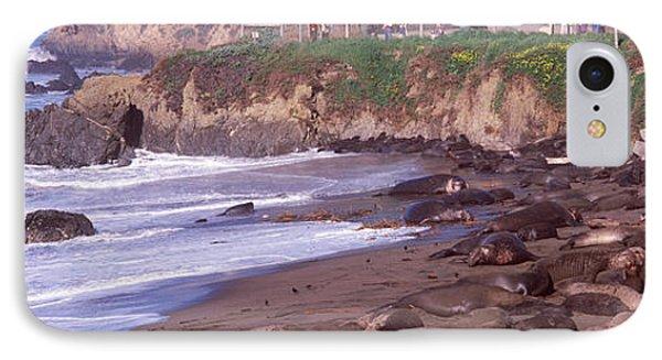 Elephant Seals On The Beach, San Luis IPhone Case