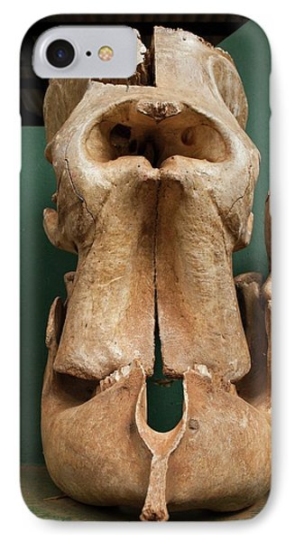 Elephant Skull Cyclops Fossil Myth IPhone 7 Case by Paul D Stewart