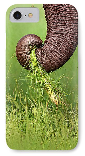 Elephant Trunk Pulling Grass IPhone Case