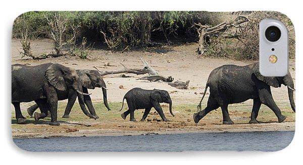 Elephants Walking Along Edge Of Chobe IPhone Case