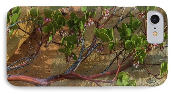 Elevated View Of Fallen Manzanita Tree IPhone Case by Panoramic Images