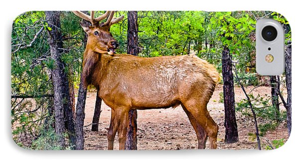Elk In Canyon National Park IPhone Case by Bob and Nadine Johnston