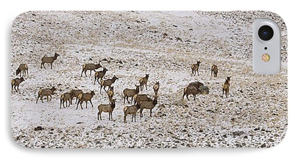 IPhone Case featuring the photograph Elk In Snow Panorama 14x47 by J L Woody Wooden