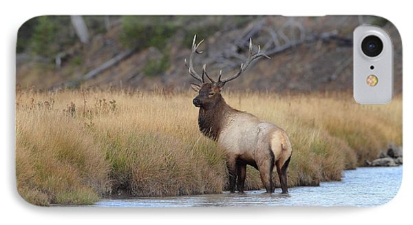 Elk On The Madison IPhone Case by Daniel Behm