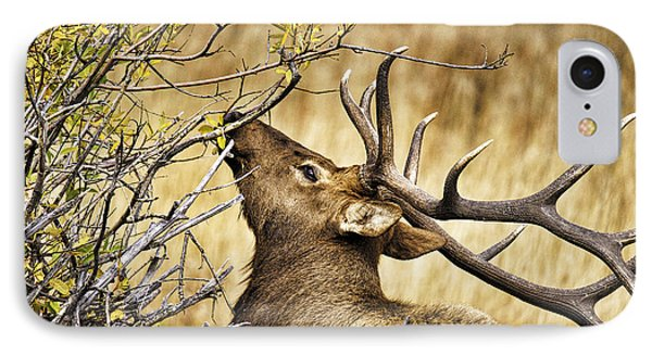 Elk Portrait IPhone Case by Catherine Fenner