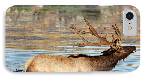 Elk Cooling Down In Lake IPhone Case