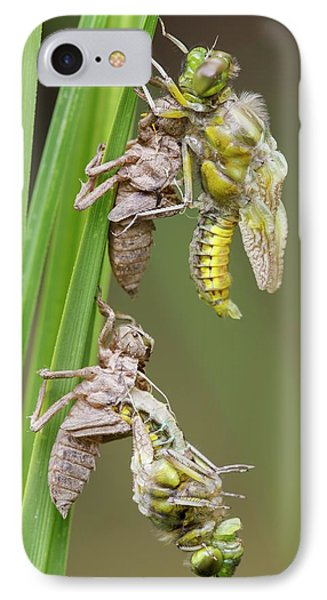 Emerging Chaser Dragonflies IPhone Case