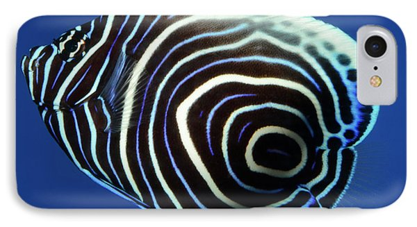 Emperor Angelfish IPhone Case by Nigel Downer