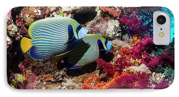 Emperor Angelfish On A Reef IPhone Case