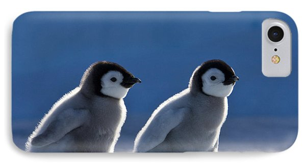 Emperor Penguin Chicks Phone Case by Jean-Louis Klein and Marie-Luce Hubert