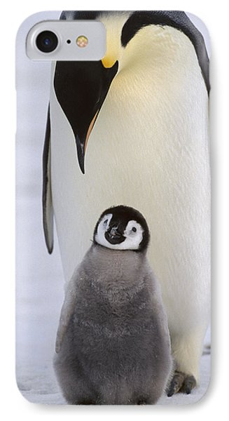 Emperor Penguin With Chick Antarctica IPhone Case by Konrad Wothe