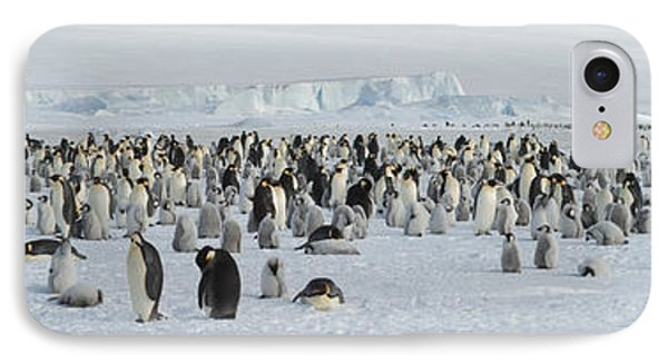 Emperor Penguins Aptenodytes Forsteri IPhone 7 Case by Panoramic Images