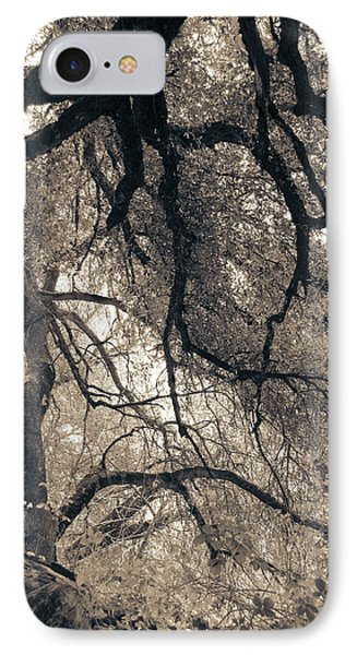 IPhone Case featuring the photograph Enchanted Forest by Katie Wing Vigil
