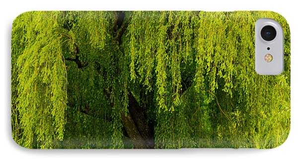 Enchanting Weeping Willow Tree  IPhone Case by Carol F Austin