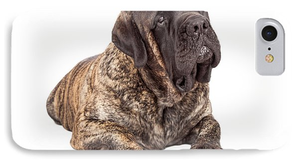 English Mastiff Dog Laying Head Tilted IPhone Case