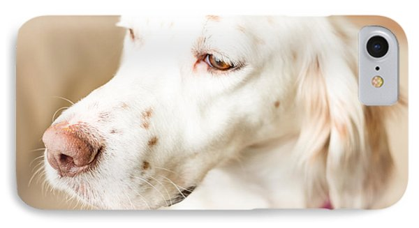 English Setter In Natural Light IPhone Case