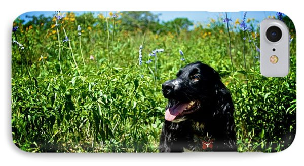 Field Spaniel In The Wildflowers IPhone Case by Kristina Deane