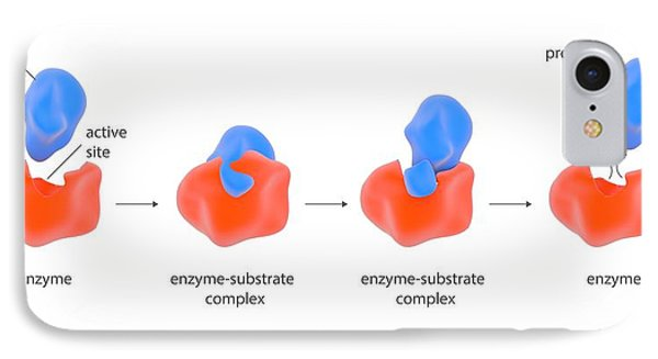 Enzyme Reaction Stages IPhone Case