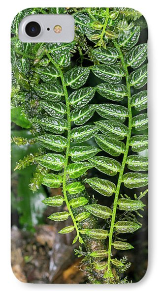 Epiphyte On A Rainforest Tree IPhone Case by Dr Morley Read