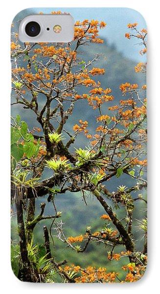 Erythrina Poeppigiana Tree And Epiphytes IPhone Case by Bob Gibbons