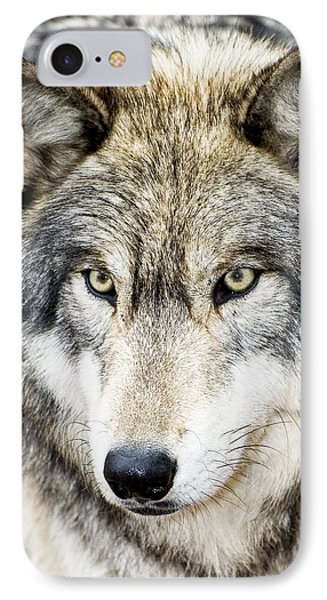 Essence Of Wolf IPhone Case by Gary Slawsky