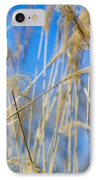 Eulalia Grass Native To East Asia IPhone Case by Anonymous