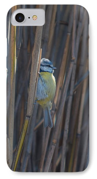 Eurasian Blue Tit - Parus Caeruleus IPhone Case by Jivko Nakev