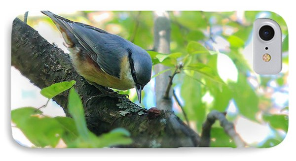 Eurasian Nuthatch - Sitta Europaea IPhone Case by Jivko Nakev