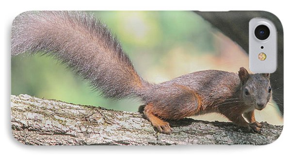 IPhone Case featuring the photograph Euroasian Red Squirrel - Sciurus Vulgaris by Jivko Nakev