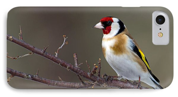 European Goldfinch  IPhone Case by Torbjorn Swenelius