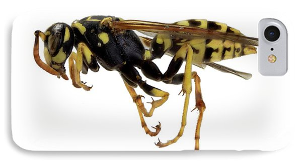 European Paper Wasp IPhone Case by F. Martinez Clavel