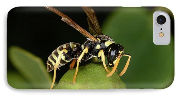 European Paper Wasp IPhone Case by Nigel Downer