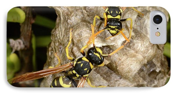 European Paper Wasps And Nest IPhone Case by Nigel Downer