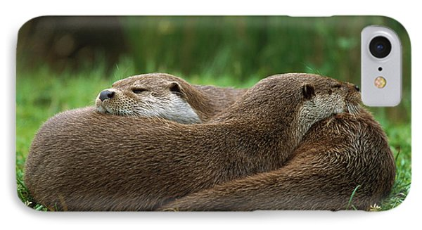 European River Otter Lutra Lutra IPhone 7 Case by Ingo Arndt
