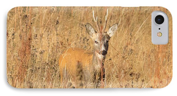 European Roe Deer IPhone Case by Jivko Nakev