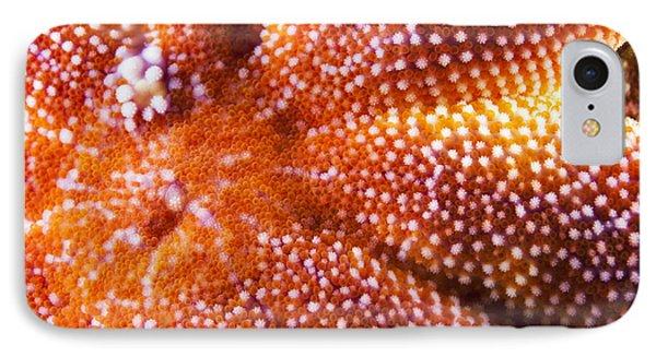 European Starfish Mouth Shetland IPhone Case by Matt Doggett