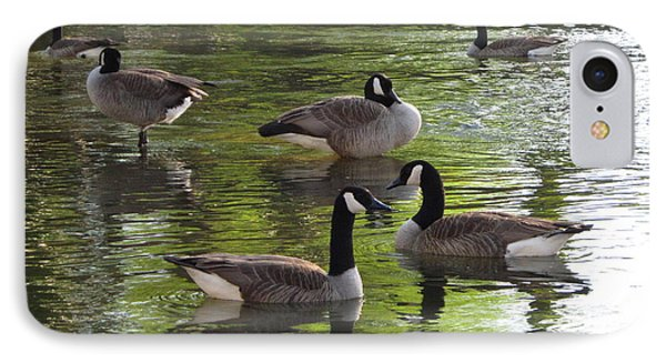 Evening Geese Gathering IPhone Case