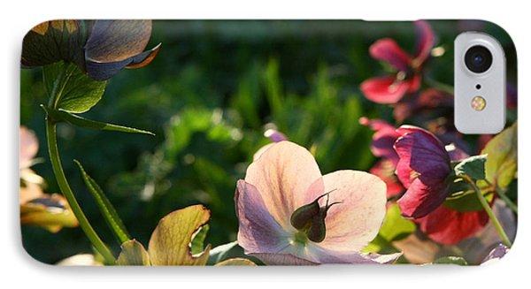 IPhone Case featuring the photograph Evening Light by Liz  Alderdice
