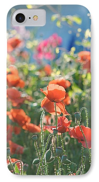 Evening Lights The Poppies IPhone Case