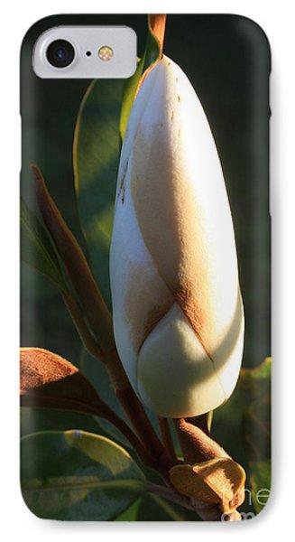 Evening Magnolia Bud IPhone Case by Amanda Holmes Tzafrir