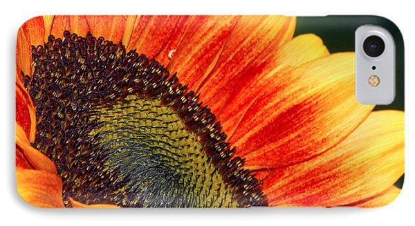 Evening Sun Sunflower IPhone Case by Sharon Talson