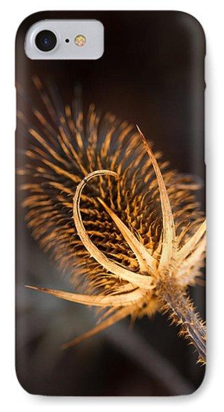 Evening Thistle IPhone Case by Haren Images- Kriss Haren