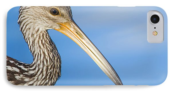Everglades Limpkin IPhone Case by Mark Andrew Thomas