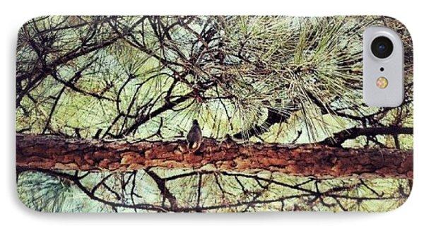 IPhone Case featuring the photograph Evergreen Bird by Tara Potts