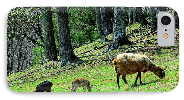Ewe And Spring Lambs Grazing Phone Case by Thomas R Fletcher